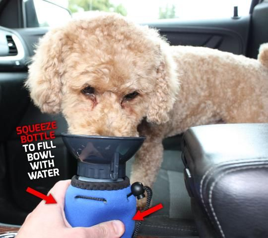 Lap It Up Dog Water Bottle: Made in Canada!